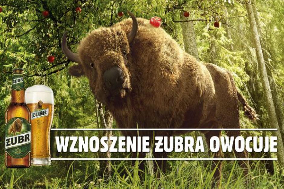 Jesienna odsłona i nowa kampania marki piwa Żubr