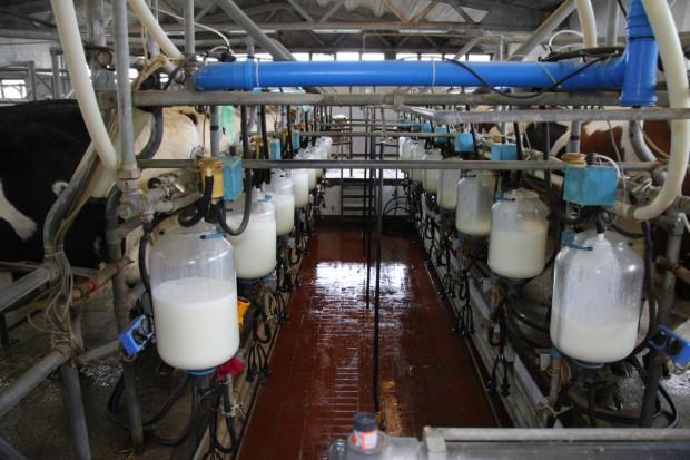 Ceny skupu mleka o ponad 33% wyższe niż przed rokiem