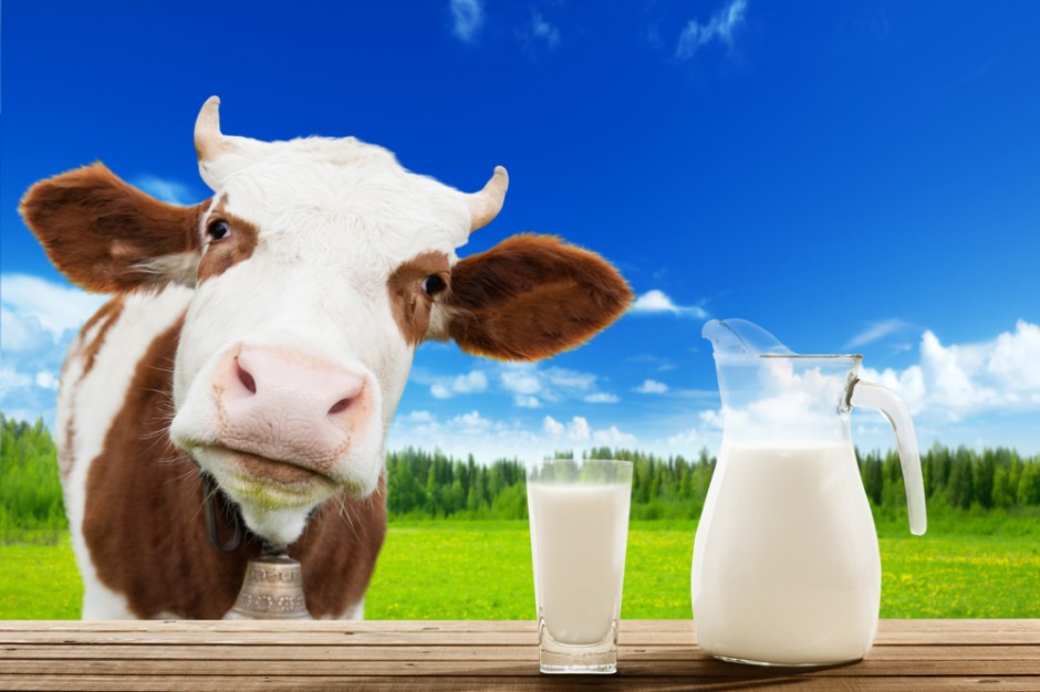 Na Słowacji powstaje jedna z największych farm mlecznych w Europie Centralnej