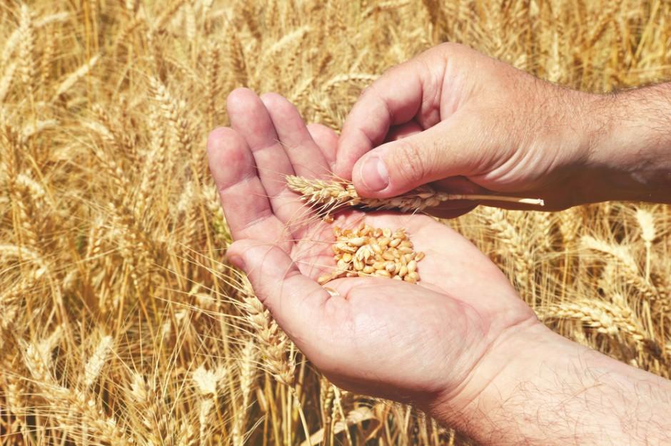 Izba Zbożowo-Paszowa: Rolnicy nadal nie chcą sprzedawać ziarna po obecnych cenach