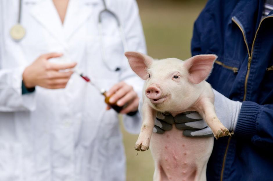 Weterynarze: Zakaz handlu w niedziele utrudni leczenie zwierząt