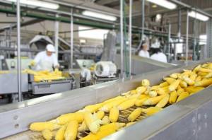 KPMG: Ok. 60% firm produkcyjnych w strategii na najbliższy rok zakłada wzrost
