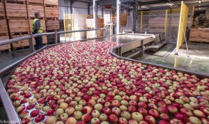 Grupa LubApple wprowadza na rynek Jabłko Lubelskie