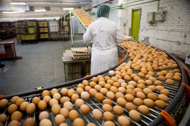KIPDiP opracowuje projekt systemu informującego o cenach jaj