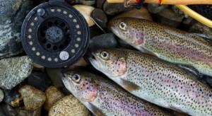 IERiGŻ: Spada produkcja ryb wędzonych