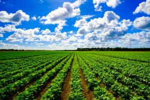 Eksperci: Poprawa jakości ziemi uprawnej pomaga wychwycić CO2