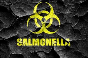 Salmonella znów atakuje