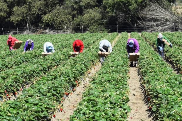 Od 2018 r. nowe przepisy dotyczące sezonowego zatrudniania cudzoziemców