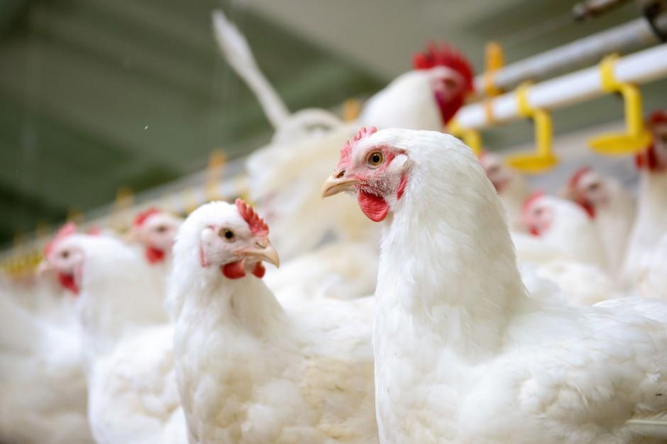 Chiny otwierają rynek dla polskiego drobiu