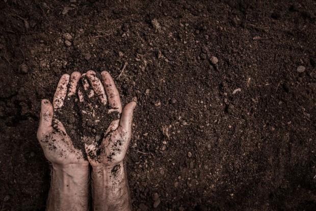 5 grudnia obchodzimy Światowy Dzień Gleby