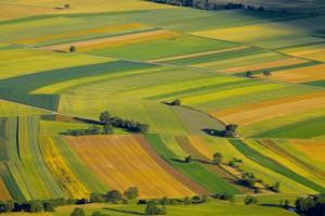 Ukraina: Obrót gruntami rolnymi będzie zakazany jeszcze do 2019 r.