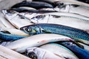 20 grudnia obchodzimy Dzień Ryby