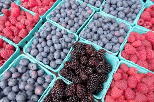 GUS: Zbiory owoców jagodowych o ok. 15 proc. niższe niż rok temu