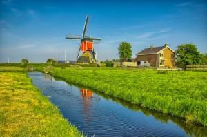 Rekordowe dochody holenderskich rolników