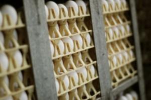 Kto zrezygnował z używania i sprzedaży jaj klatkowych w 2017 roku?