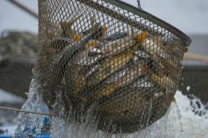 Podlaskie: 5,5 mln zł na projekty związane m.in. z rybactwem
