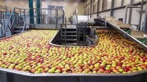 Rajpol: Dostawy naszych owoców do Lidla generują ¼ obrotów firmy (galeria zdjęć)