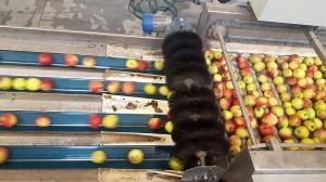 Zdjęcie numer 2 - galeria: Rajpol: Dostawy naszych owoców do Lidla generują ¼ obrotów firmy (galeria zdjęć)