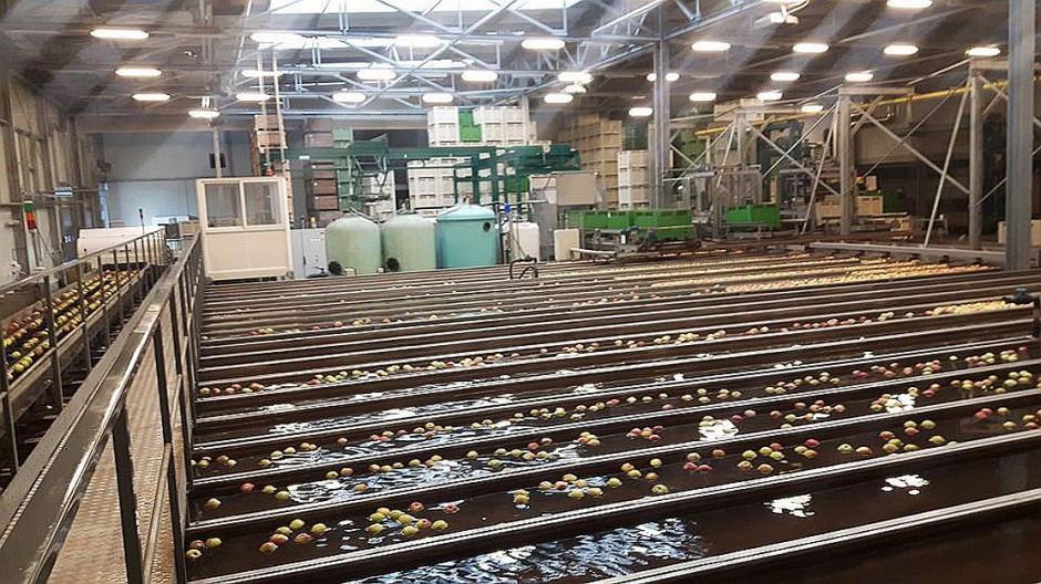 Zdjęcie numer 3 - galeria: Rajpol: Dostawy naszych owoców do Lidla generują ¼ obrotów firmy (galeria zdjęć)