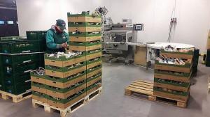 Zdjęcie numer 6 - galeria: Rajpol: Dostawy naszych owoców do Lidla generują ¼ obrotów firmy (galeria zdjęć)