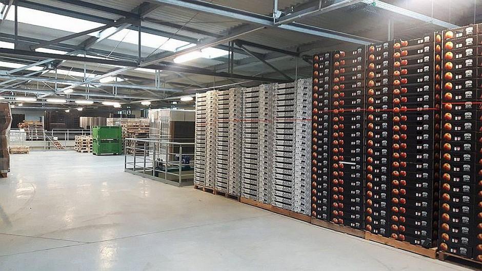 Zdjęcie numer 7 - galeria: Rajpol: Dostawy naszych owoców do Lidla generują ¼ obrotów firmy (galeria zdjęć)