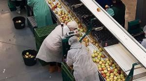 Zdjęcie numer 10 - galeria: Rajpol: Dostawy naszych owoców do Lidla generują ¼ obrotów firmy (galeria zdjęć)