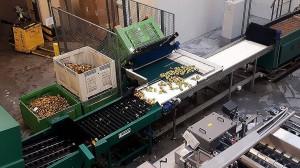 Zdjęcie numer 11 - galeria: Rajpol: Dostawy naszych owoców do Lidla generują ¼ obrotów firmy (galeria zdjęć)