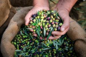 USA wprowadza dodatkowe cło na hiszpańskie oliwki