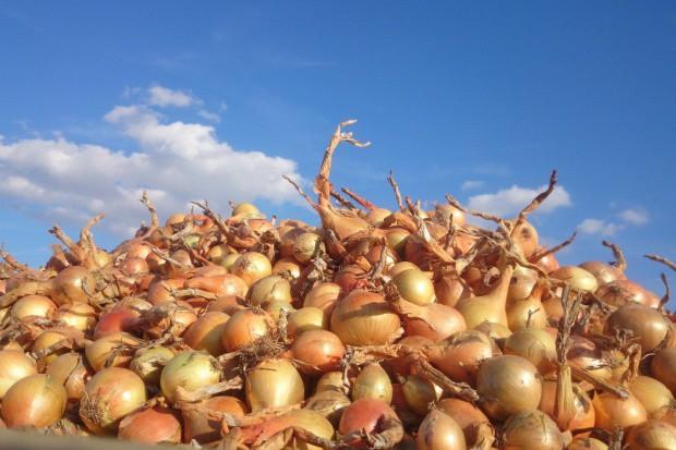 Brytyjski producent warzyw rozważa przeniesienie części upraw do Polski