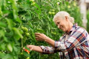 MRiRW ws. ułatwienia sprawowania opieki nad osobami starszymi w gospodarstwach rolnych