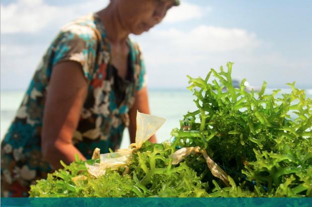 ASC i MSC opracowały wspólne standardy certyfikacji alg morskich