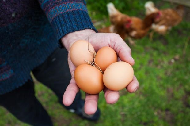 Wielka Brytania: Jaja z wolnego wybiegu stanowią już połowę rynku