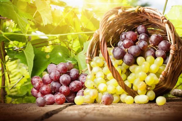 Naukowcy: Składniki winogron mogą łagodzić objawy depresji
