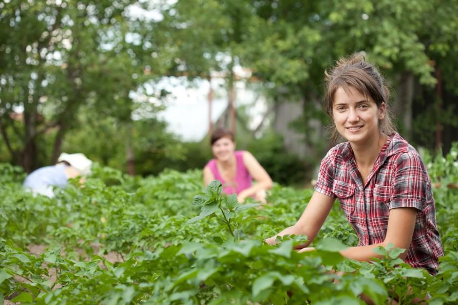 W 2017 roku Ukraińcy w Polsce najczęściej pracowali w rolnictwie