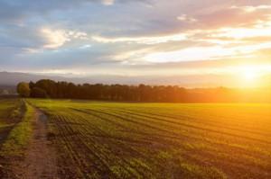 Raport IERiGŻ: 2017 r. był drugim z kolei dobrym rokiem dla rolnictwa