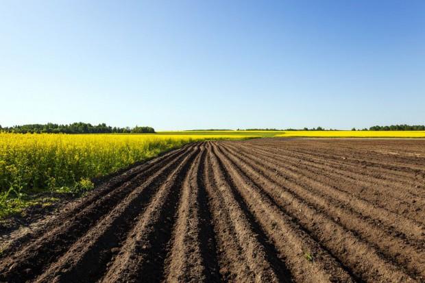 KOWR: ponad 50 tys. ha gruntów wydzierżawili rolnicy w 2017 roku