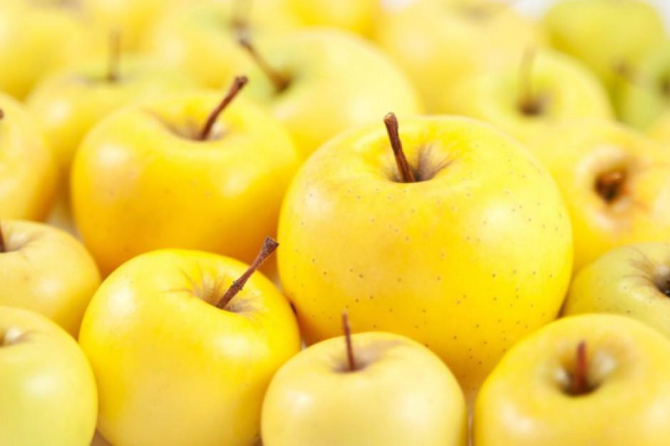 Problemy z podażą jabłek w Europie. Półkula południowa nie wypełni luki na rynku
