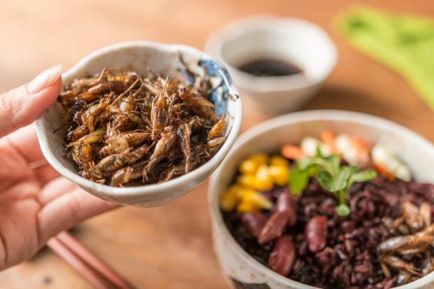 Ekspert: Codziennie ponad 2 mld ludzi na świecie jada owady