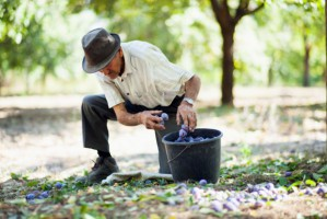 MRiRW: Nowy rodzaj umowy dla pracowników sezonowych