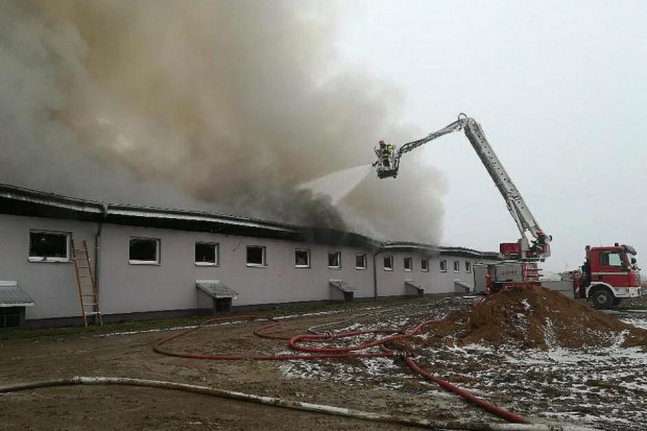 Kujawsko-Pomorskie: W pożarze chlewni zginęły 3 tysiące świń