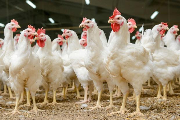 KRD-IG: Raport NIK nt. antybiotyków jest tendencyjny