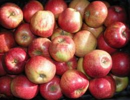 Bronisze: Ceny jabłek w ostatnich tygodniach nie wzrosły