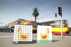 """""""Uwolnij kurę"""". Akcja CIWF przeciwko klatkom w hodowli zwierząt (zdjęcia)"""