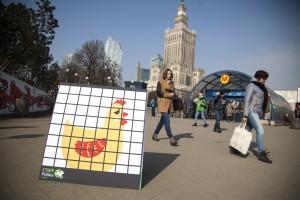"""Zdjęcie numer 2 - galeria: """"Uwolnij kurę"""". Akcja CIWF przeciwko klatkom w hodowli zwierząt (zdjęcia)"""