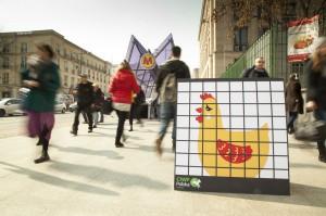 """Zdjęcie numer 5 - galeria: """"Uwolnij kurę"""". Akcja CIWF przeciwko klatkom w hodowli zwierząt (zdjęcia)"""