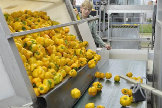 Zrzeszenie Producentów Papryki RP: Chcemy integrować producentów i dystrybutorów papryki