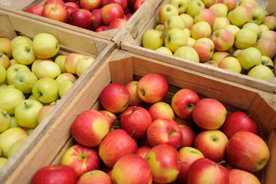 Analiza: Spadek zapasów jabłek wpłynie na kolejne podwyżki cen jabłek