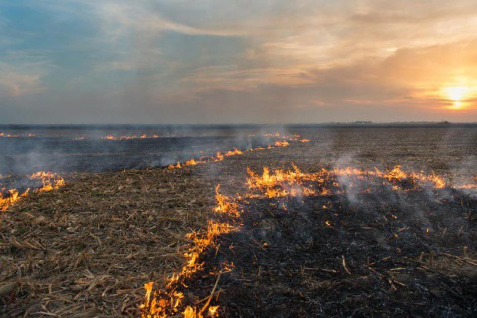 ARiMR: Za wypalanie traw można trafić do więzienia