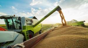 IERGiŻ: W 2018 r. przewiduje się niewielki spadek zbiorów zbóż (raport)