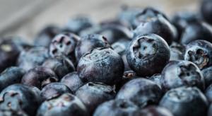 Producenci borówek otrzymali 180 tys. zł na promocję owoców